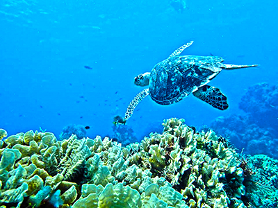 discover the underwater world of Cozumel reefs with this Cozumel Snorkel Tour