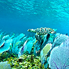 Snorkel in Cozumel with Best Snorkel Tour in Cozumel Mexico