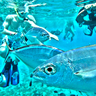 Snorkeling Cozumel with Cozumel Snorkel and Cielo Party Tour