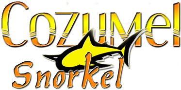 snorkel in cozumel with cozumel snorkeling tours for the best snorkeling en cozumel mexico