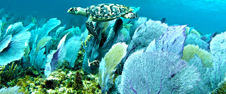 Snorkel with the best cozumel Snorkel tours Cozumel Mexico