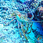 Explore the underwater world of the Cozumel Coral Reefs