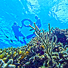 We take you further & Longer on our Cozumel Snorkel Tour