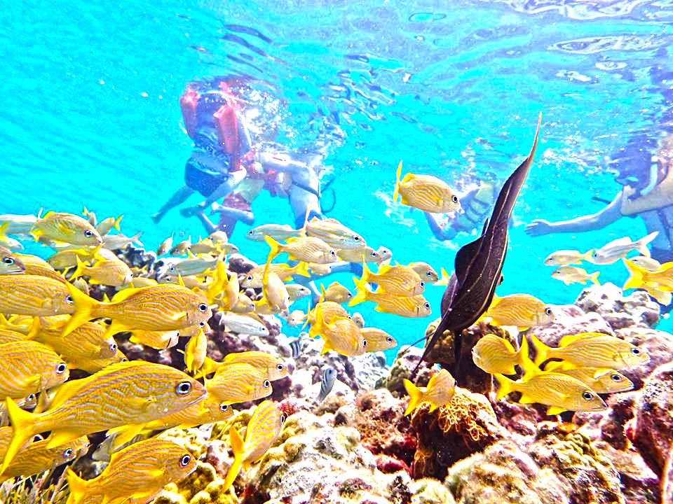 Into the Blue: Best Snorkel Sites in Mexico | TropixTraveler