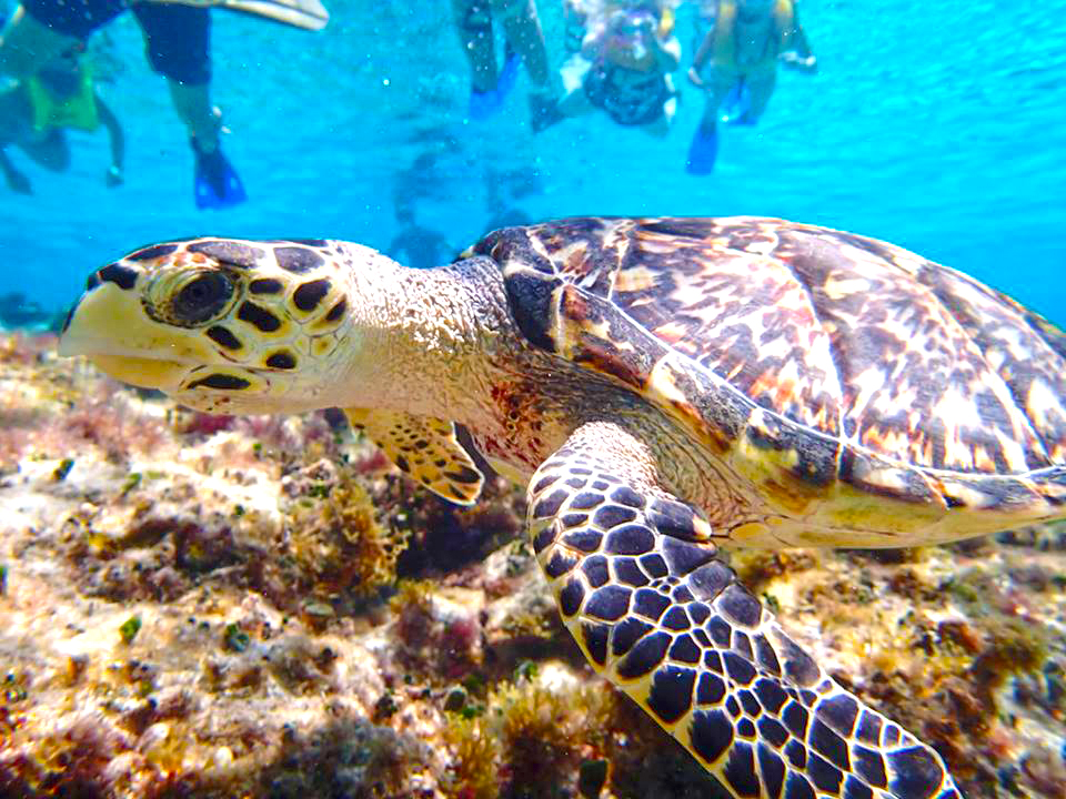 Snorkel in Cozumel with Tiger and Cozumel Snorkel and Cielo Party Tour in Cozumel Mexico