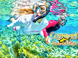 Cozumel Cielo Snorkel Tour with Tiger to Snorkel en Cozumel to the Best Cozumel Reefs and swim in El Cielo Cozumel Mexico